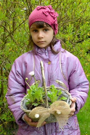 The girl holds in hand a basket with daisy seedling