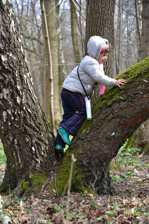 huge tree: The little girl clambers on a big tree in the spring wood