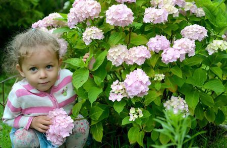 The little girl sits under a bush of the blossoming hydrangea Reklamní fotografie