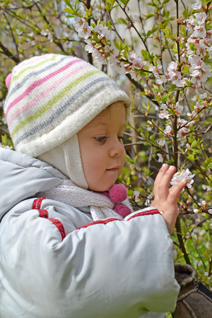 The little girl touches flowers of the Chinese cherry in a spring garden Stock Photo