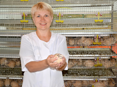 The female poultry breeder holds a quail in hand