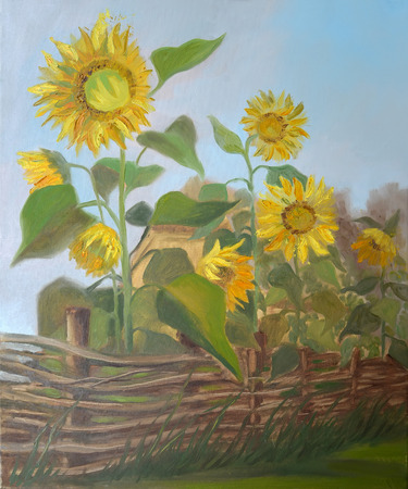 Picture Sunflowers behind a Wattle Fence. Canvas, oil