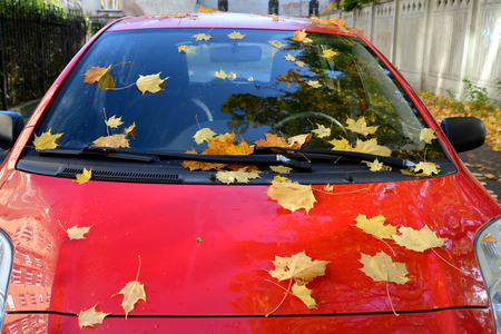 Yellow maple leaves lie on the red car