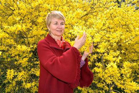 The mature woman admires yellow colors of a forzition