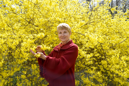 The woman stands near the blossoming bush forsaytiya