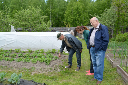 Summer residents look at a bed with the growing potatoes