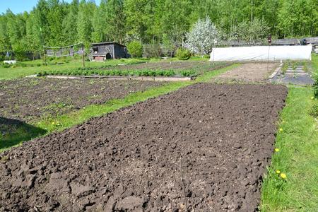 The dug-up kitchen garden on the seasonal dacha