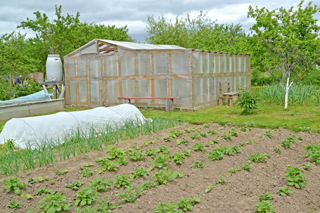 The greenhouse, hotbed and kitchen garden on the seasonal dacha. Spring Stock Photo