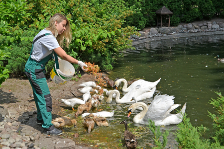 KALININGRAD, RUSSIA - JUNE 13, 2019: The worker of a zoo feeds waterfowl Editorial