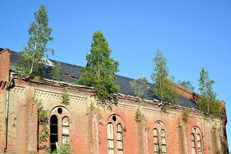A fragment of the kirhi Gross Krishzanen building with trees on the roof. Village of Zapovednoe, Kaliningrad region