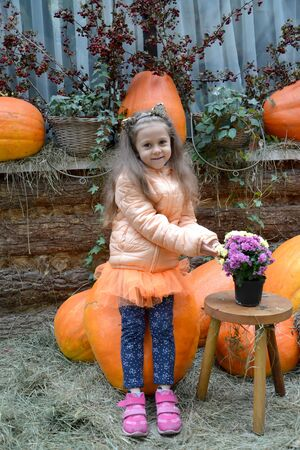 A five-year-old girl with a bouquet of astra sits on a large pumpkin in the yard of a rural house. Autumn Harvest Stock fotó
