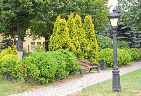 A fragment of a park with a planting of western thuja, variety Golden Smaragd (Thuja occidentalis L.)