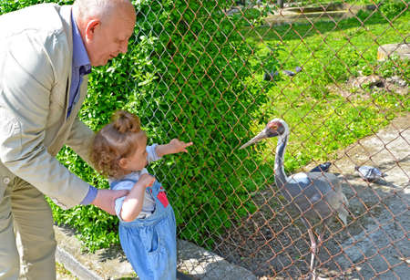 Grandfather shows the little granddaughter of the Daurian crane in the zoo Foto de archivo