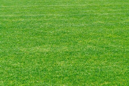 Green wall texture background. Stadium grass