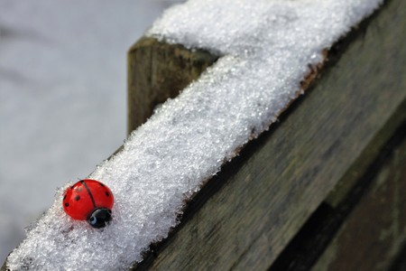 mojo: ladybird in the snow Stock Photo