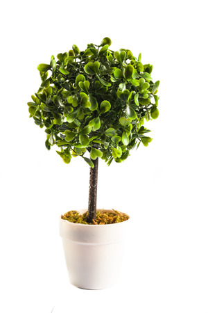 home office interior: Small artificial tree in a pot isolated in white background. Concept image for interior design and decoration of home and office. Copy space available.