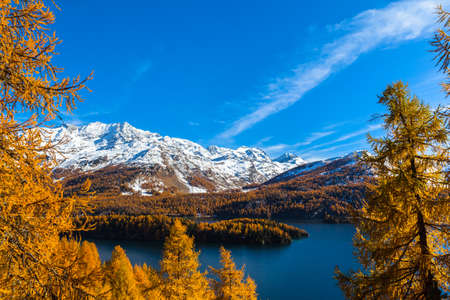 Stunning view of Sils lake and the swiss alps in Upper Engadine with golden trees in autumn, Canton of Grisons, Switzerland. Stock fotó