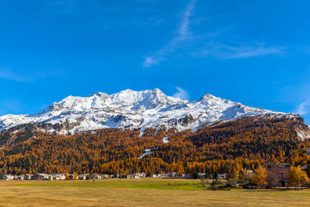 Panorama view of the golden autumn in Upper Engadin, with Piz Corvatsch of the swiss alps and colorful trees and town of Sils-Maria, Canton of Grisons, Switzerland