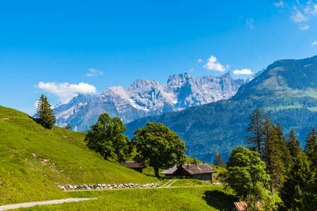 Panorama view on the hiking path on Bernese Oberland with trees in foreground and mountain range of the alps in background, Switzerland.
