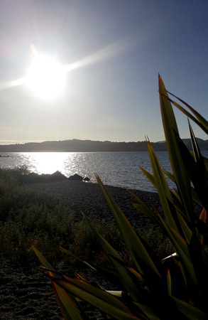 new zealand flax: Taupo Sunset Stock Photo