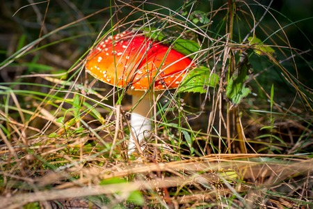 Mushrooms grow in the forest. Poisonous, inedible.