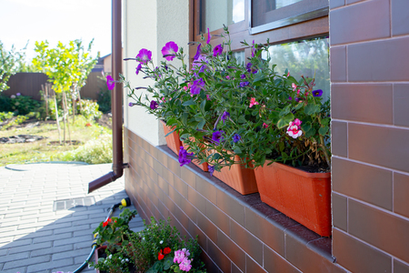 Street flowers on the window in the pots. Hot sunny day.