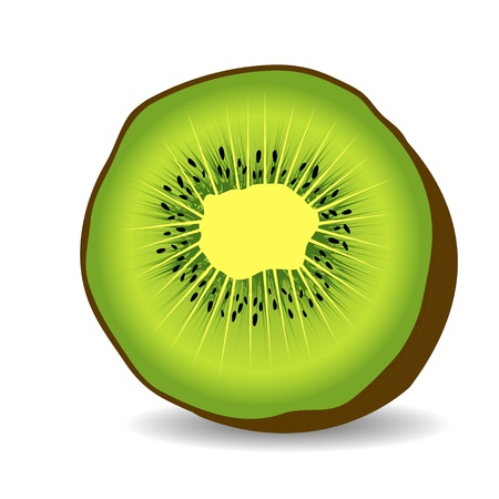 Kiwi fruit vector illustration Vector