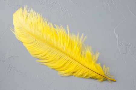 Yellow ostrich feather on a gray background. Texture of plaster Stock Photo