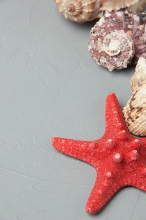 Seashells on gray textured background. Texture of plaster.