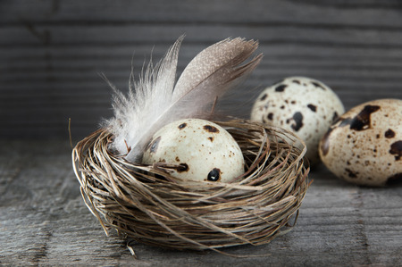 Quail eggs and feather in nest on textured old wooden background. Copy space for text, Ester decorations