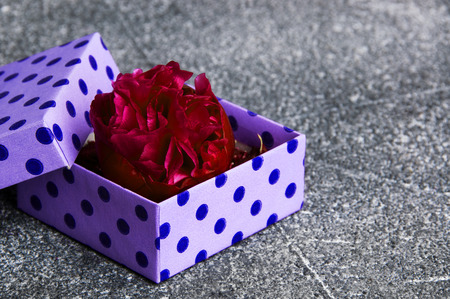 Peony bud in a purple box with polka dots on gray concrete background. Copy space and gift ideas.