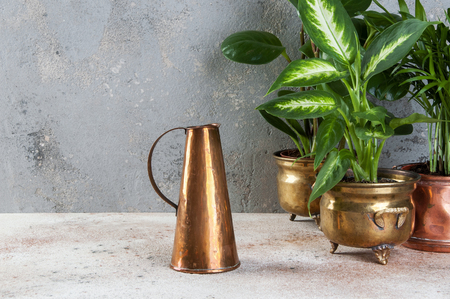 Copper jug and green plants in brass and copper vintage flower pots on a concrete background. Copy space for text.