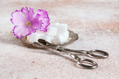 Cubes of white sugar and flower violet in a vintage metal saucer with vintage sugar tongs on concrete background. Copy space for text