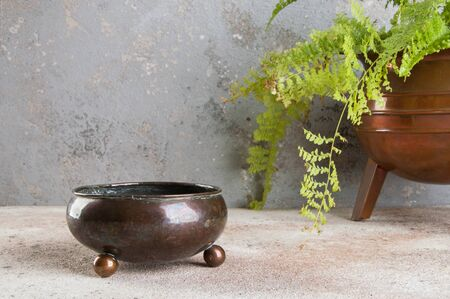 Antique metal flower pot and green plant on a concrete background. Copy space for text. 写真素材