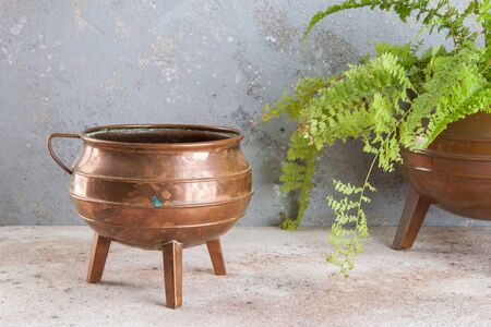 Antique copper flower pot and green plant on concrete background. Copy space for text.