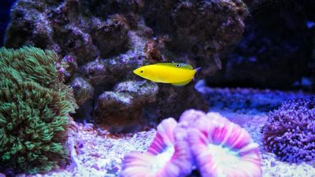reefer: Coral reef aquarium scenes Stock Photo
