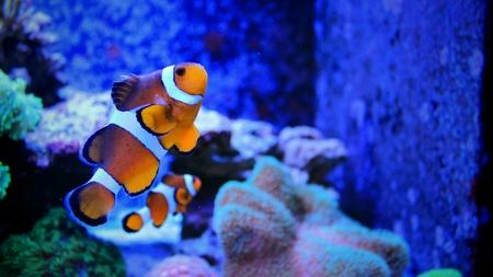 Coral reef aquarium fish Stock Photo