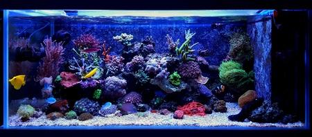 lps: Dream coral reef aquarium Stock Photo