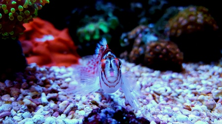 aqua: Face to Face with Hawkfish