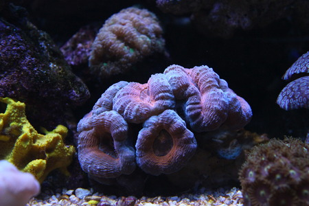 lps: Multicolored LPS coral