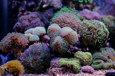 Coral reef aquarium scene Stock Photo