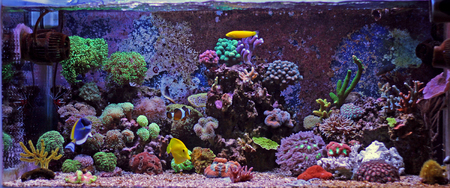 reefscape: coral reef tank Stock Photo