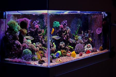 reefscape: Coral reef aquarium tank Stock Photo