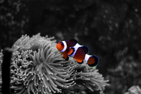 Popular saltwater fish - splash colors