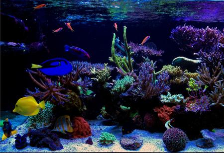 Nano coral reef aquarium tank