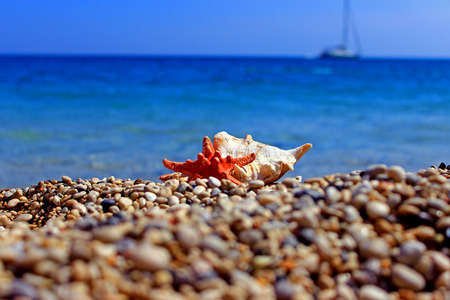 Conch Beach Starfish Shell Sand