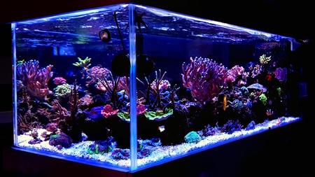 Toma panorámica del tanque del acuario de arrecife de coral