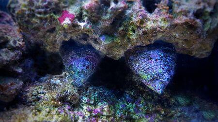 Close up image of saltwater snail invertebrate sea creature