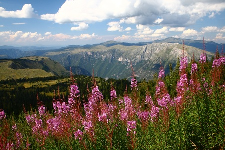 Mountains with flowers photo