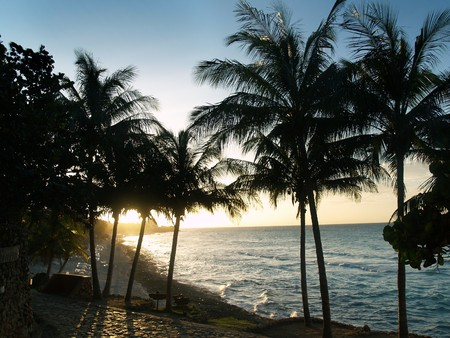 Sunset in Caribbean. Palms on blue sky background.